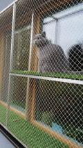 Obrázek k inzerátu Ochranná síť pro kočky s hliníkovým rámem